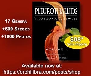 Pleurothalid